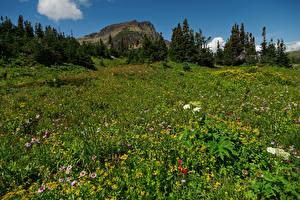 Bilder Vereinigte Staaten Parks Grünland Felsen Fichten Glacier National Park