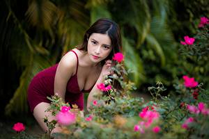 Hintergrundbilder Asiatisches Bokeh Posiert Braunhaarige Blick Dekolletee Mädchens