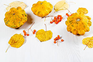 Images Autumn Pumpkin Berry White background Foliage Food