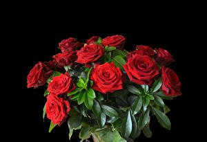 Images Bouquets Rose Black background Red Flowers