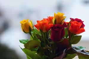 Pictures Bouquets Roses Bokeh Multicolor flower