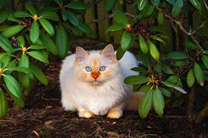 Fotos & Bilder Katze Blick Tiere