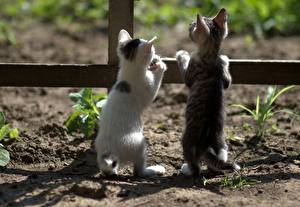Photo Cats Kitty cat Two Back view Fence animal