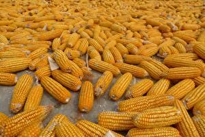 Bilder Mais Viel Lebensmittel