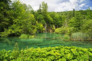Fotos Kroatien Park Wasserfall See Wald Plitvice Lakes National Park Natur