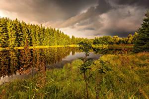 Picture Czech Republic Autumn Forests Pond Grass  Nature