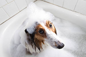 Pictures Dogs Foam Bathroom Glance Frown Animals
