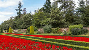 Wallpapers England Gardens Design Shrubs Trees Cliveden Garden Nature