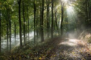 Hintergrundbilder Wälder Bäume Lichtstrahl Nebel