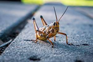 Fotos & Bilder Kurzfühlerschrecken Großansicht Tiere