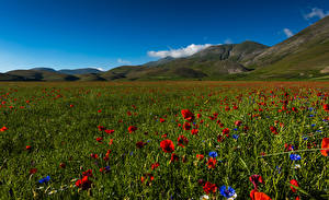 Hintergrundbilder Italien Park Acker Mohn Kornblume Hügel Sibillini national park