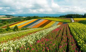 Fotos Japan Acker Hügel Bunte Khokkajdo