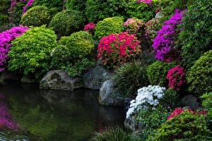 Hintergrundbilder Japan Präfektur Tokio Park Teich Rhododendren Steine Strauch Natur