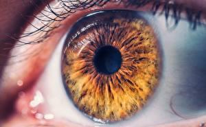 Wallpapers Macro Closeup Eyes Brown
