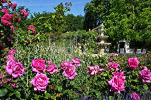 Bakgrunnsbilder Nederland Parker Roser Skulptur Busker Arcen Limburg Natur