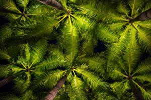 Hintergrundbilder Palmen Untersicht Ansicht von unten