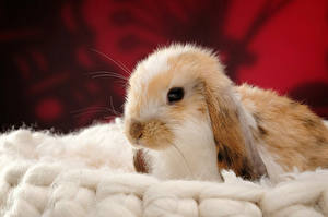 Rabbits Wallpaper 334 Images Pictures Download