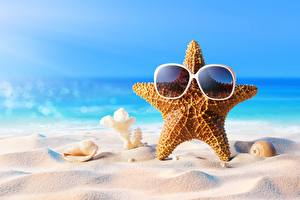 Images Starfish Shells Summer Glasses Sand Nature