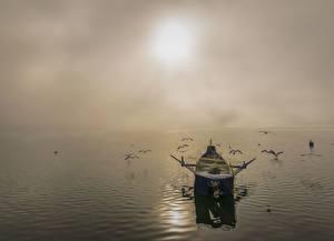 Sfondi desktop Albe e tramonti Mare Uccelli Piccola barca Gabbiani Pesca Foschia Natura