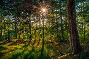 Fotos USA Wälder Florida Baumstamm Gras Lichtstrahl Natur