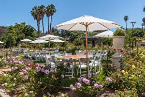 Image USA Gardens Rose California Shrubs Parasol Chairs South Coast Botanic Garden Nature