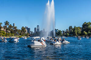 Hintergrundbilder Vereinigte Staaten Park See Springbrunnen Schwäne Kalifornien Los Angeles Palmen Echo Park Lake