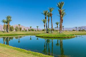 Hintergrundbilder USA Parks Teich Kalifornien Palmen Borrego Springs Resort Golf Course