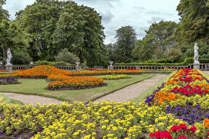 Images United Kingdom Gardens Tagetes Lawn Trees Waddesdon Manor Nature
