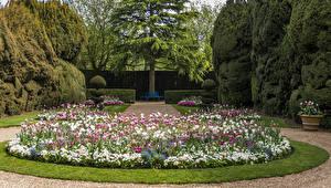 Hintergrundbilder Vereinigtes Königreich Garten Tulpen Design Rasen Strauch Bäume Ascott House Garden
