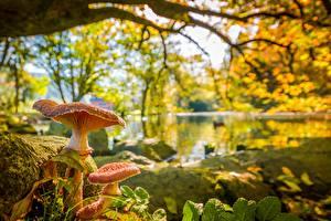 Fotos Herbst Pilze Natur Teich Bokeh