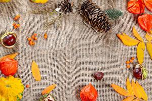 Bilder Herbst Kürbisse Beere Kastanien Zapfen Blatt Physalis