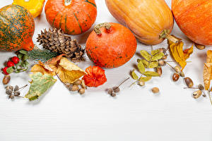 Pictures Autumn Pumpkin White background Pine cone Foliage Dog rose fruit Nature