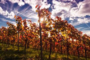 Hintergrundbilder Herbst Himmel Strauch Lichtstrahl Wolke Vineyard