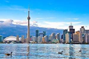 Photo Canada Houses Lake Toronto Tower Cities