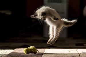 Bilder Hauskatze Kätzchen Sprung Lustige Tiere