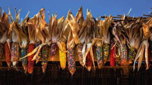 Bilder Kukuruz Mehrfarbige das Essen