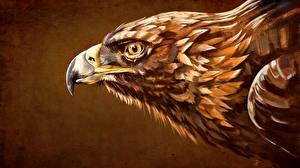 Pictures Eagles Painting Art Head Beak Animals