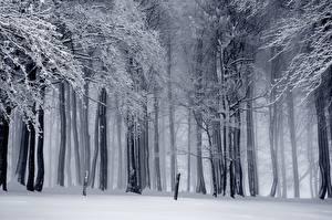 Hintergrundbilder Wald Winter Bäume Schnee Nebel Natur