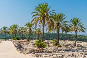 Fotos Israel Park Stein Wälder Palmengewächse Meguido National Park Natur