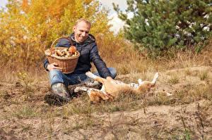 Bilder Mann Pilze Hunde Weidenkorb Sitzt Lächeln Spielt