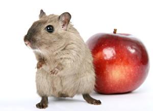 Hintergrundbilder Mäuse Äpfel Großansicht Weißer hintergrund ein Tier