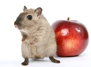 Wallpapers Mice Apples Closeup White background animal