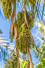 Picture Olive Birds Parrots Branches animal