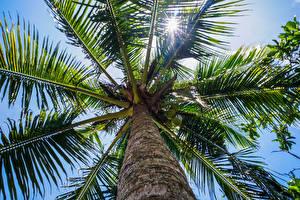 Hintergrundbilder Palmengewächse Ast Baumstamm Untersicht Ansicht von unten