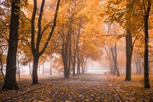 Sfondi desktop Parchi Autunno Alberi Foglie Nebbia Natura