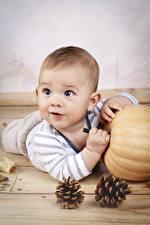 Fotos Kürbisse Baby Junge Zapfen Blick