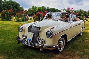 Pictures Retro Mercedes-Benz Convertible Metallic 1960 220 SE Ponton Convertible Cars