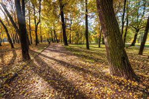 Sfondi desktop Russia San Pietroburgo Parco Autunno Foglie Alberi Park Ekaterinhof Natura