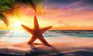Picture Sea stars Sea Evening Sunrise and sunset Summer Sand Beach Nature