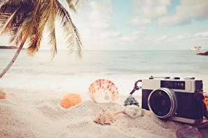 Pictures Summer Shells Sea Beach Sand Camera Nature